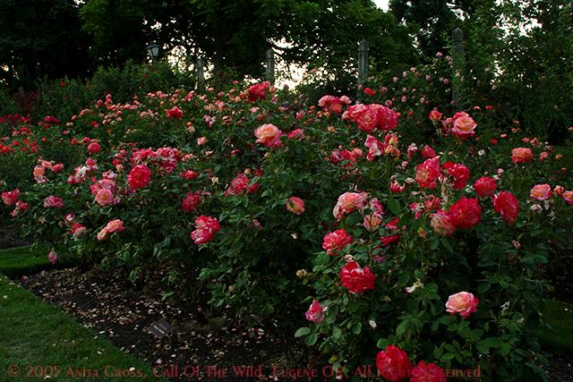 George E Owen Memorial Rose Garden Zoo 39 S Views